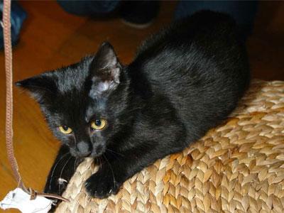 Katze Judy - Katzenbilder in meinem Internet-Tagebuch